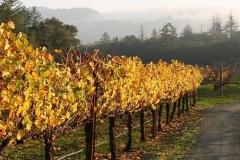 harvest-vineyards