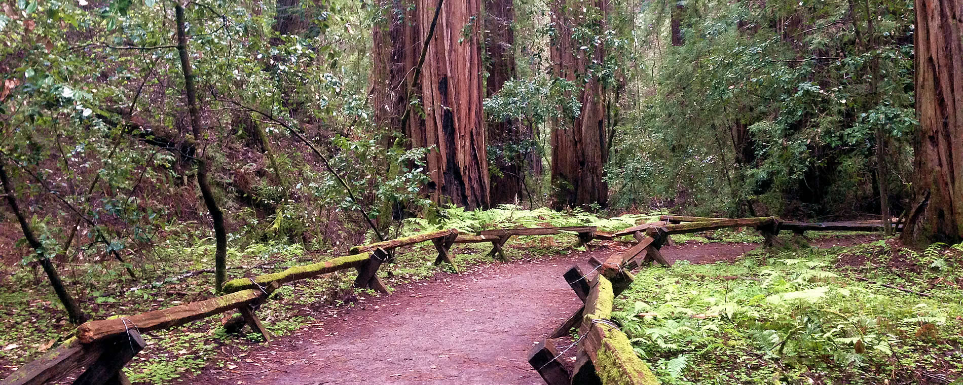 armstrong wood guerneville at the russian river