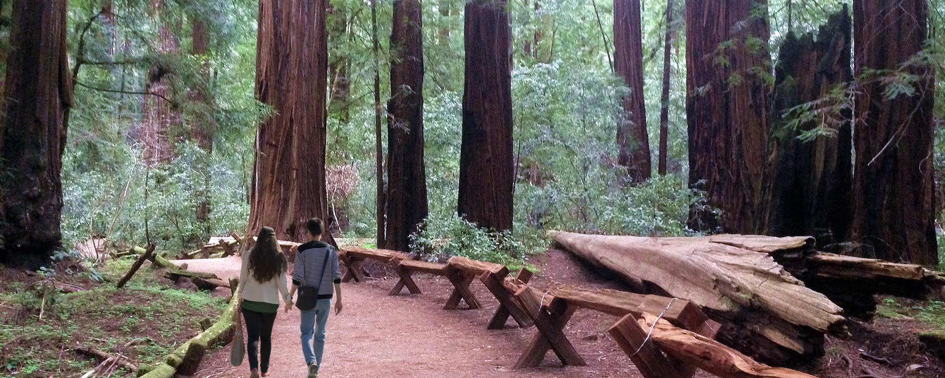 armstrong woods russian river valley things to do