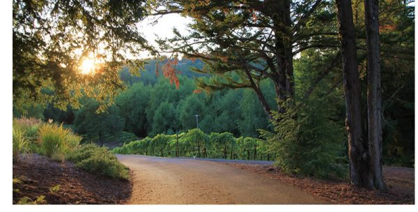 russian river valley vineyards and backroads